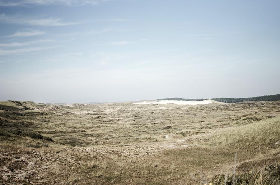dutch coast dunes