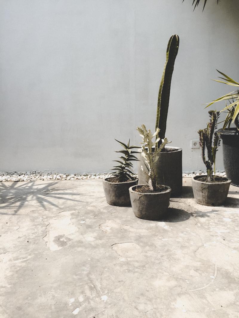minimal cactus design
